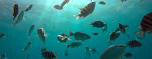 seatrek fish